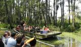 Swamp Tour Encounter.JPG