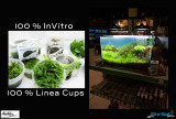 New 64 liter aquascape by Oliver Knott - 100% Linea Cups