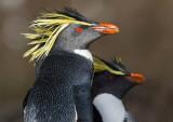 Penguins Special