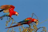 Macaws & Parrots