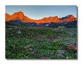 Upper Basin Wildflowers