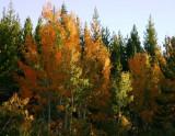 Autumn Comes Brightly