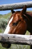 Prettiest in the Pasture