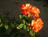 A Rose Garden Bouquet