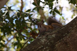 have heard that squirls in florida are skinner than those up north:)