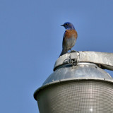 Bird - 3.jpg