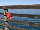 Red Rag on the Pier.jpg