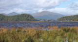 Inchcailloch and Balmaha Bay - Loch Lomond NNR
