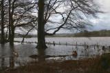 Wards Pond flood, Loch Lomond NNR