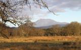 Ben Lomond from Ross Park, Loch Lomond