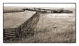 Cattle pen, Bazaar, KS