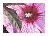 Flower/leaf detail