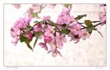 Blossom spray