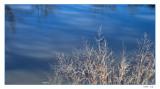 Grasses in winter