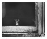 Kitten, no prospects