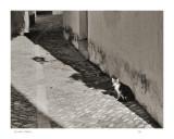 Alleyway, Ronda, Spain