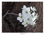 Sprig of bloom