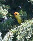 New Birds! May 12 '11