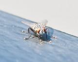 Aug 4 2011 Deck Flies 5D-015.jpg