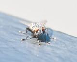 Aug 4 2011 Deck Flies 5D-017.jpg