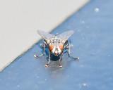 Aug 4 2011 Deck Flies 5D-021.jpg