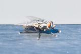 Aug 4 2011 Deck Flies 5D-030.jpg