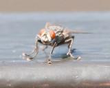 Aug 4 2011 Deck Flies 1D-008.jpg