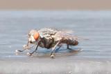 Aug 4 2011 Deck Flies 1D-014.jpg