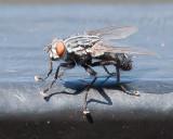 Aug 4 2011 Deck Flies 1D-023.jpg