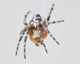 Aug 4 2011 Deck Spider 30D Macro-017.jpg