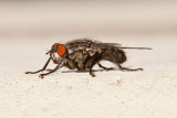 Flies On The Deck, Aug 22 2011