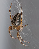 Sep 21 2011 Spider On The Deck-008-2.jpg