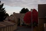 Overcast Day Exposures! Nov 08 2011
