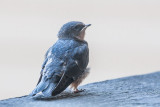 Baby Birds, June 27 2012