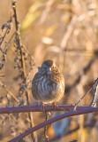 Dec 20 07 Ridgefield WL Refuge-109.jpg