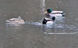 Jan 9 08 Critter Lake 1D-16.jpg