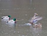 Jan 9 08 Critter Lake 1D-22.jpg