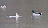 Jan 9 08 Critter Lake 1D-23.jpg
