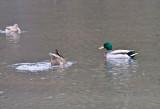 Jan 9 08 Critter Lake 1D-24.jpg