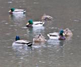 Jan 9 08 Critter Lake 1D-35.jpg