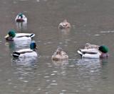 Jan 9 08 Critter Lake 1D-37.jpg