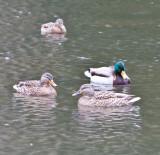 Jan 9 08 Critter Lake 1D-4.jpg