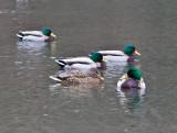 Jan 9 08 Critter Lake 1D-42.jpg