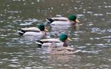 Jan 9 08 Critter Lake 1D-5.jpg