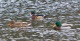 Jan 9 08 Critter Lake 1D-50.jpg