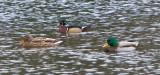 Jan 9 08 Critter Lake 1D-51.jpg