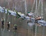 Jan 9 08 Critter Lake 1D-108.jpg