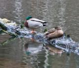 Jan 9 08 Critter Lake 1D-77.jpg
