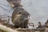 Jan 9 08 Critter Lake 1D-80.jpg