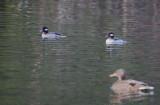 Jan 12 08 Critter Lake 1D-4.jpg
